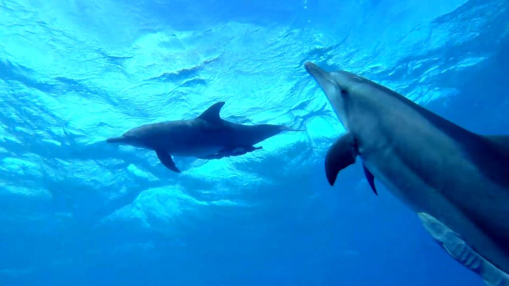 Dolphins_Cocos (Keeling).mp4.Still002