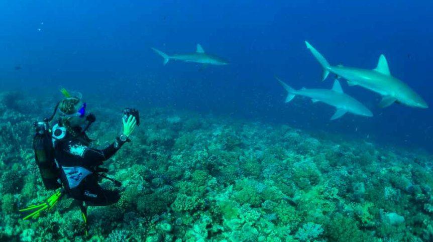 bassas-da-india-diving-with-sharks