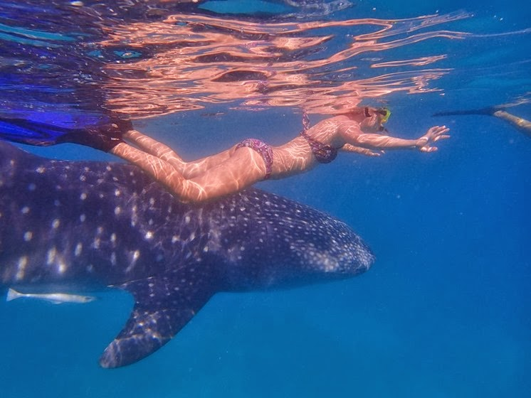 swimming with whale sharks phillippines