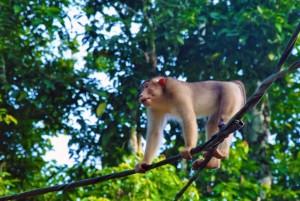 pig tailed macaque palawan river sv delos