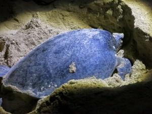 sea turtle night diving sailing circumnavigation