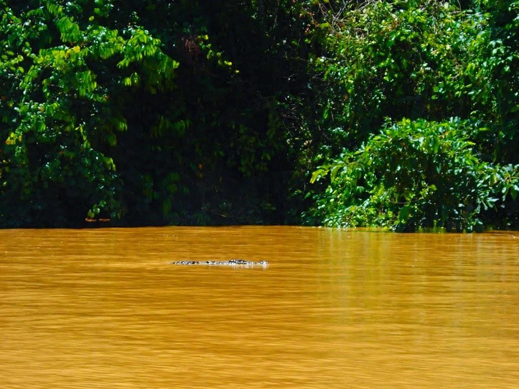 crocodile jungle sailing sv delos
