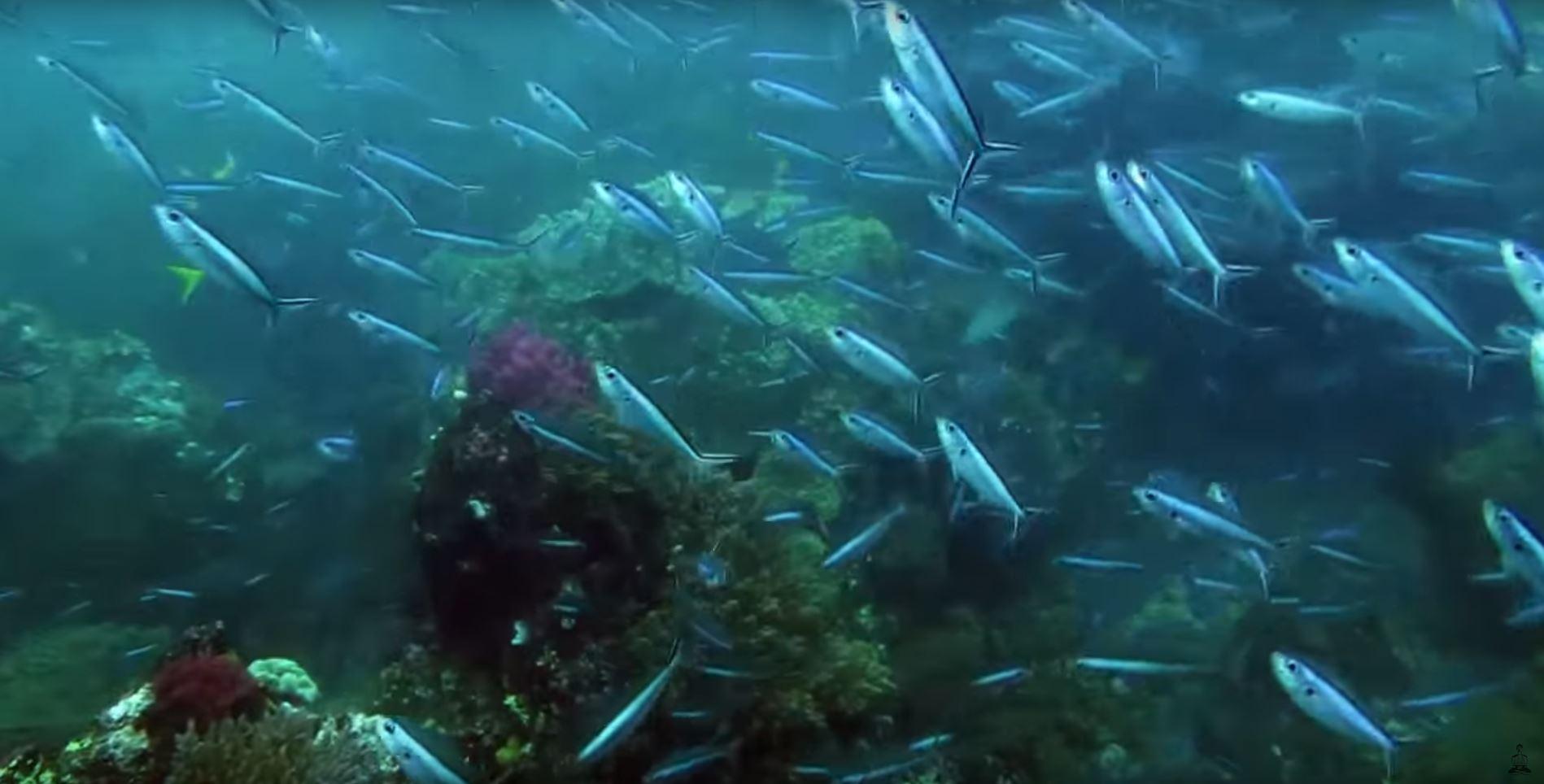 scuba diving in raja ampat