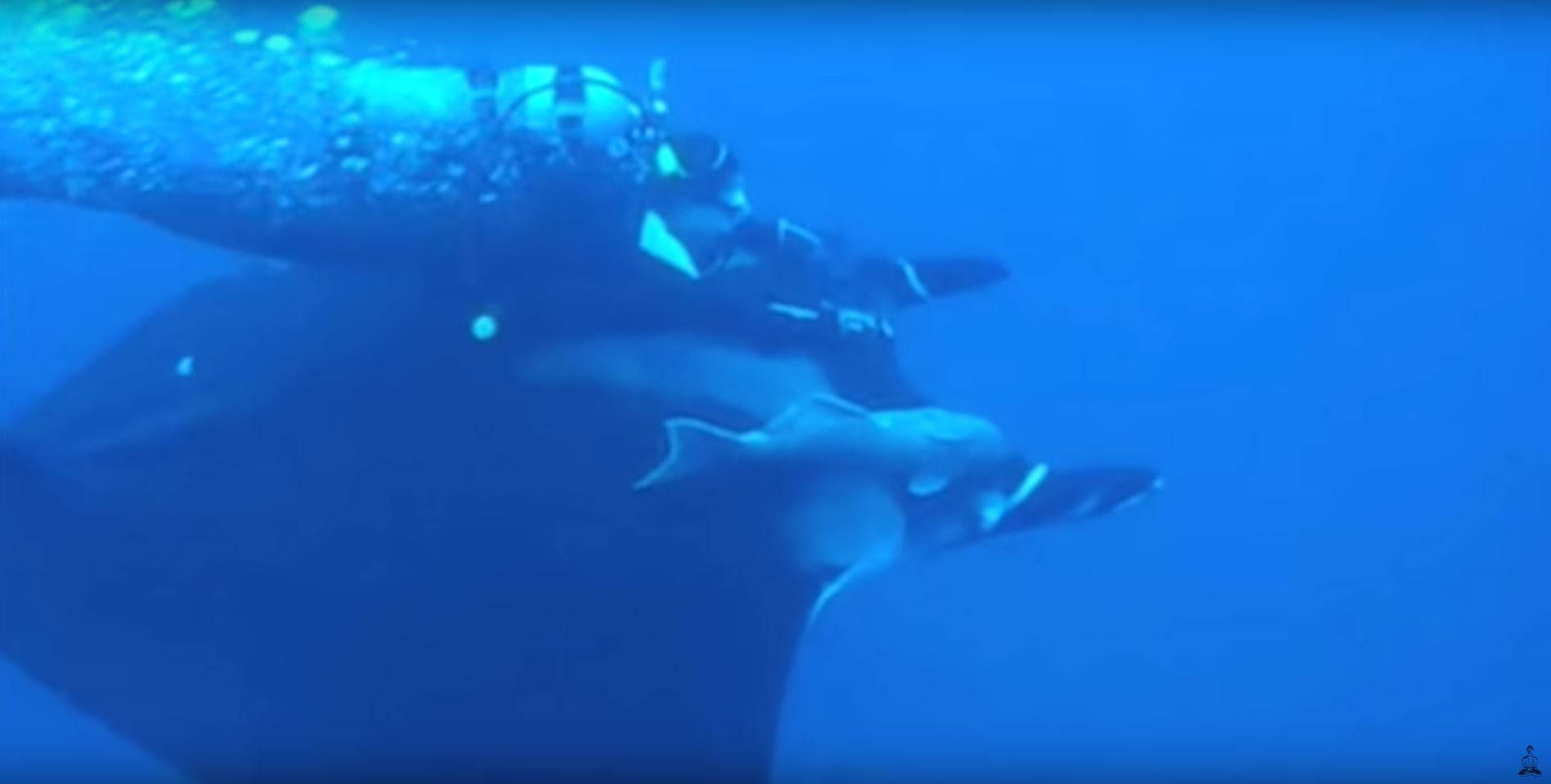 riding manta rays scuba diving