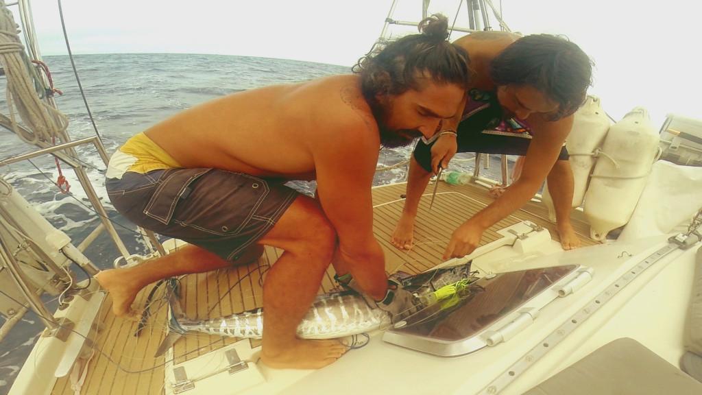 catching wahoo fresh sushi cruising sailboat