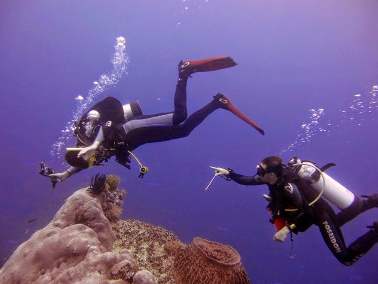 remote diving tubbataha reef