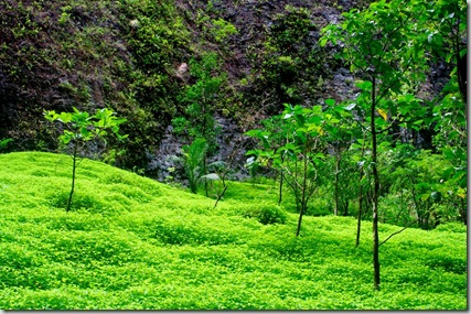nuku hiva tropical island travel blog