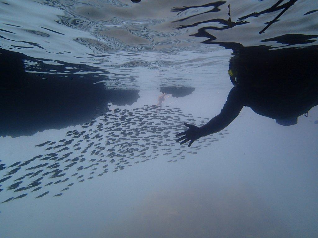 snorkeling thailand sv delos 1