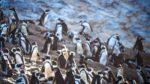 """The Delos Diaries: Part 10 """"Penguin Man."""""""